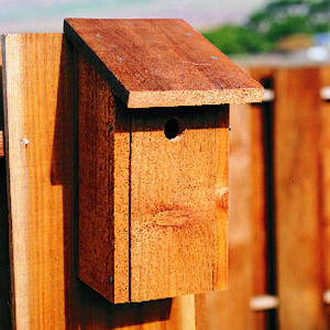 birdhouse wood