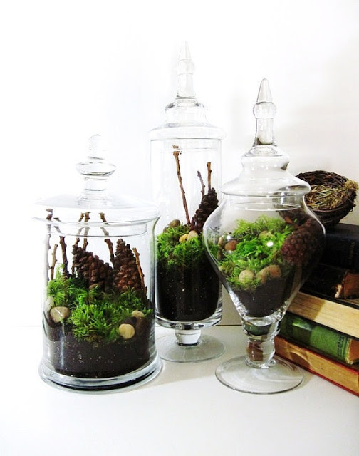 Terrarium apothecary jars gift