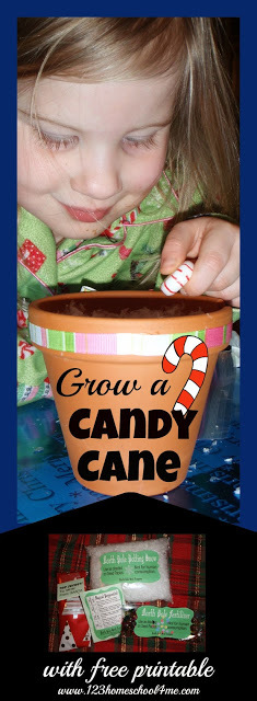 grow a candy cane