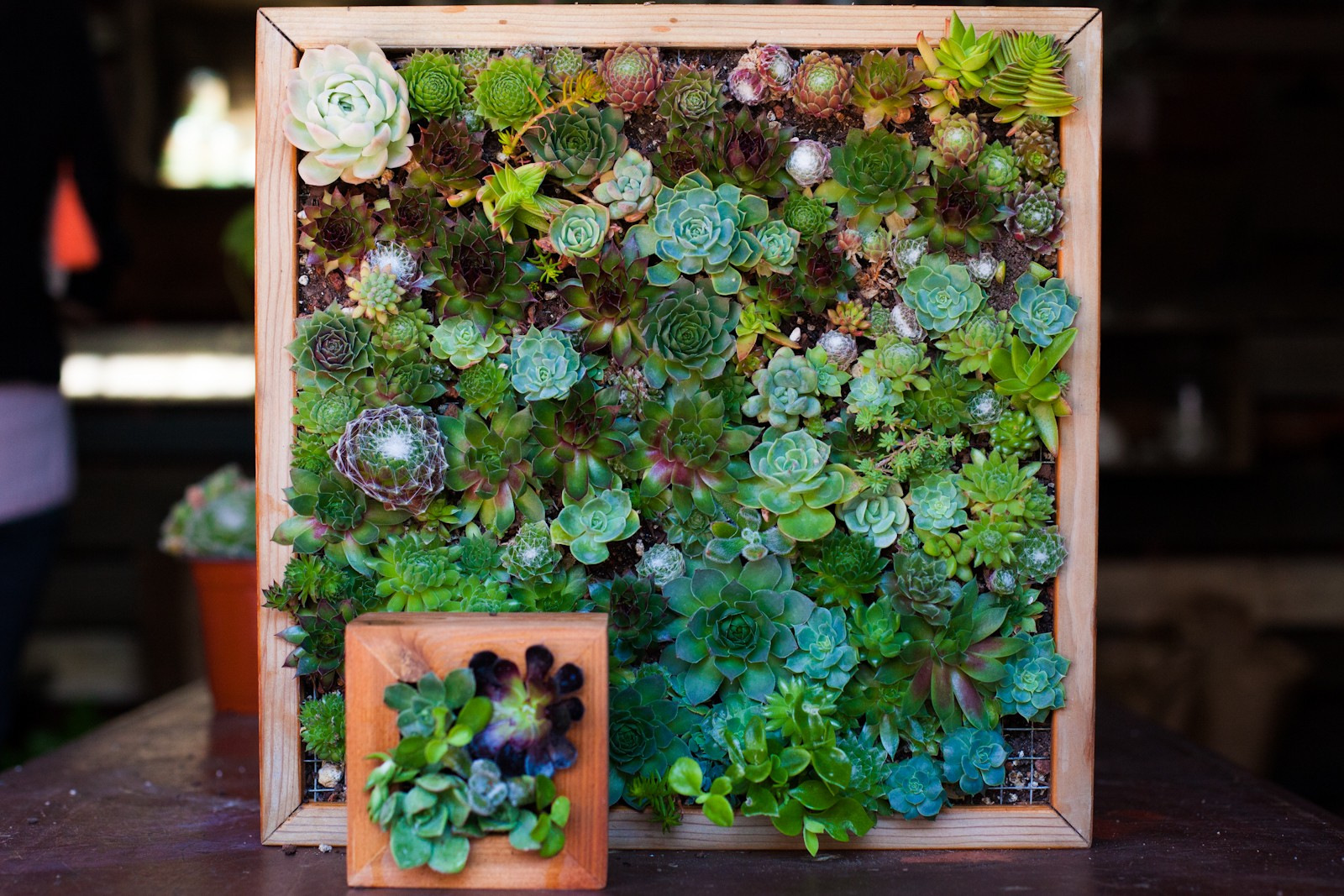 Craftionary Indoor Wall Garden Diy