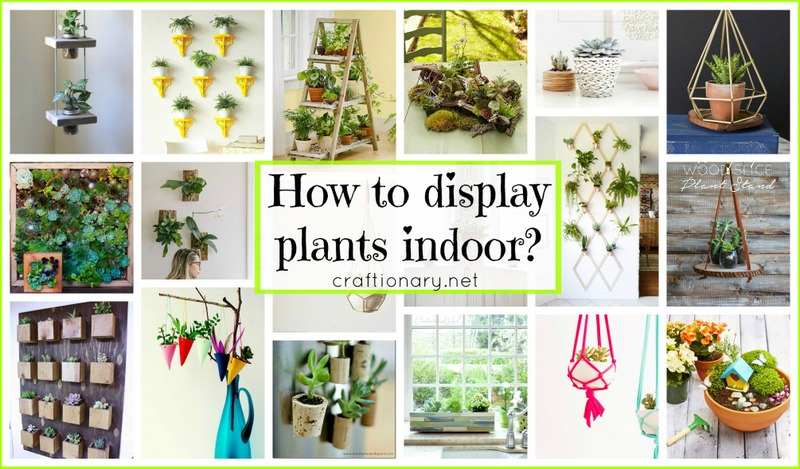 DIY plant display for home at craftionary.net