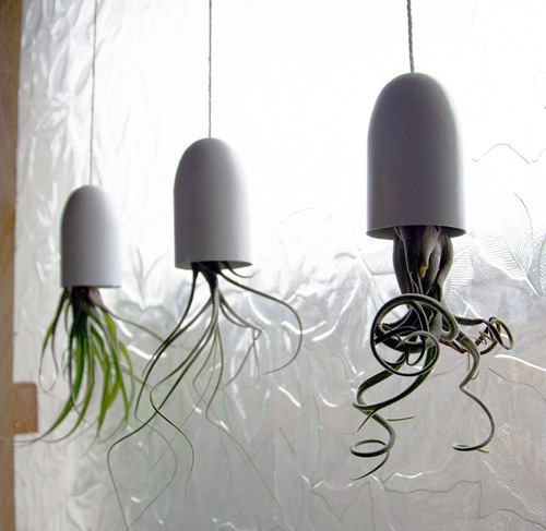Hanging Air Plant Container