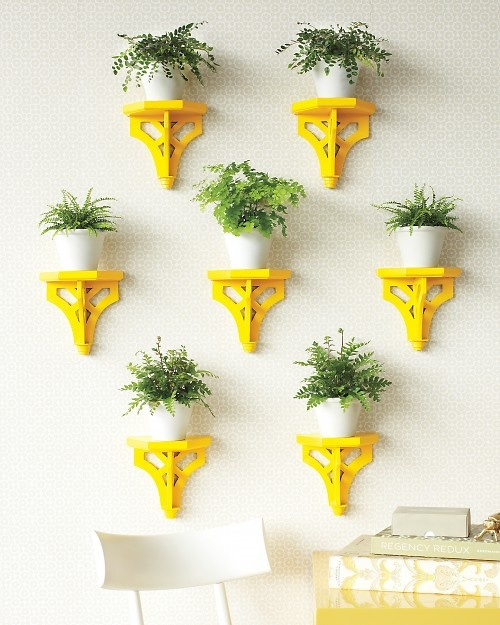 DIY vibrant plant display for home