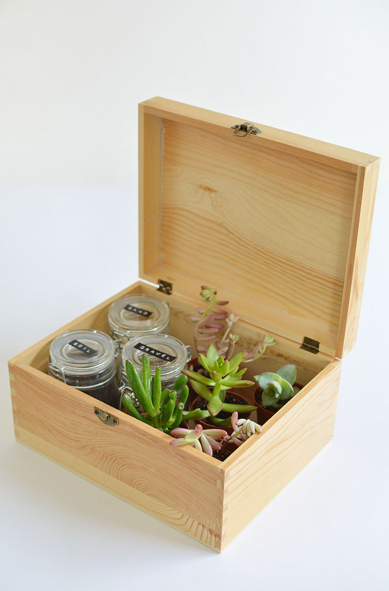 diy-succulent-gift-box