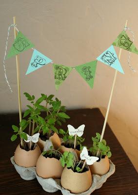 egg-shell-planters