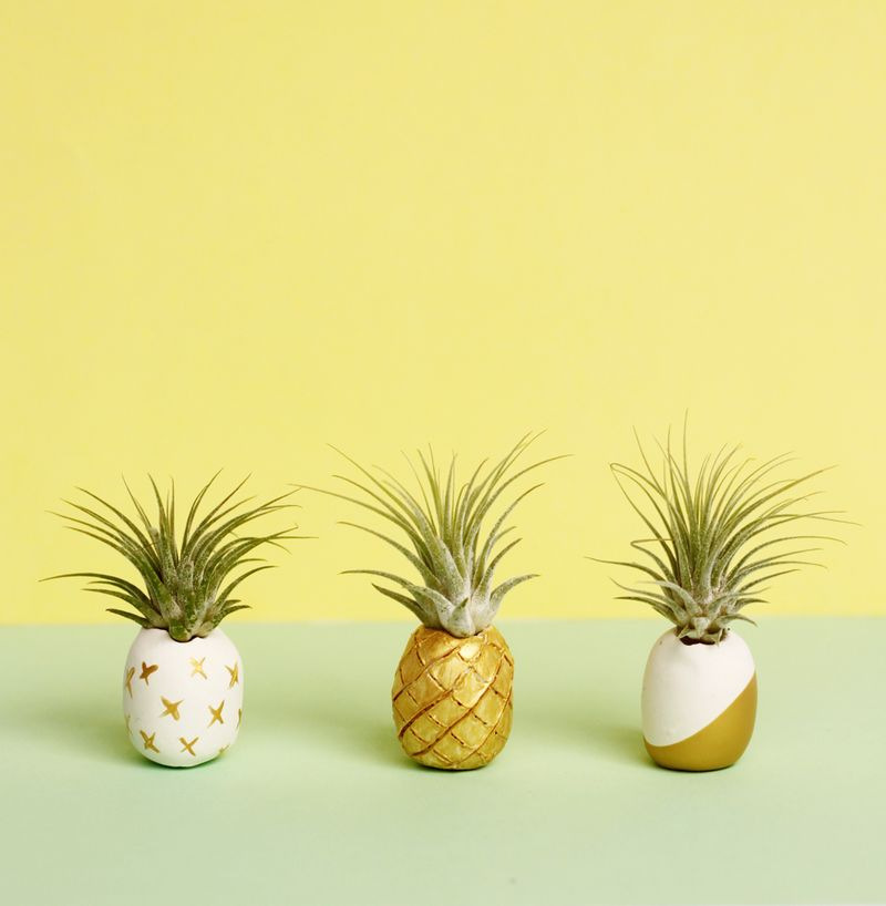Craftionary for How to plant a pineapple top in a pot