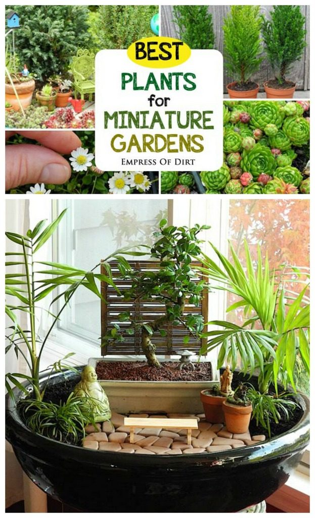 Best plants for miniature gardens