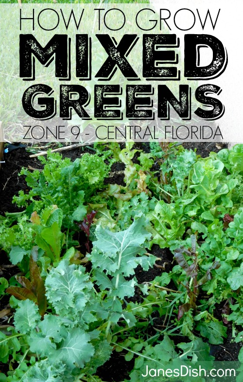 how to grow mixed greens