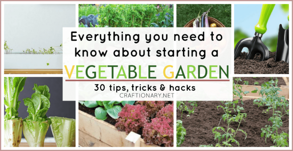 Vegetable gardening for starters