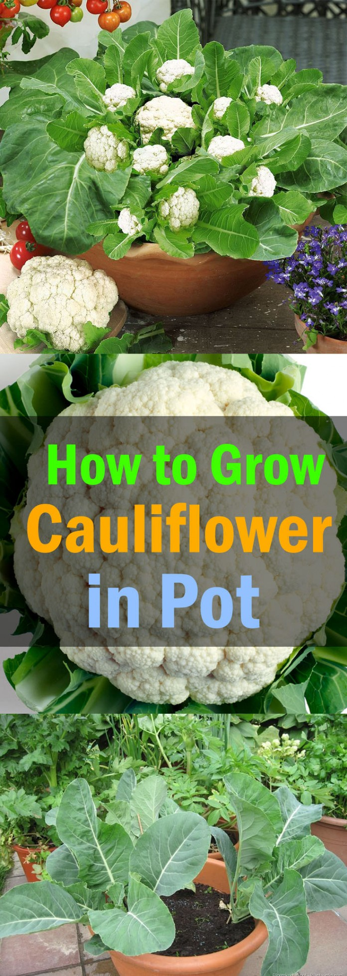 Craftionary - How to grow carrots in containers ...