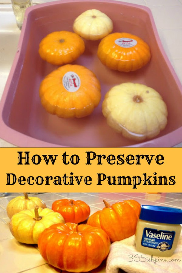 how to preserve decorative pumpkins
