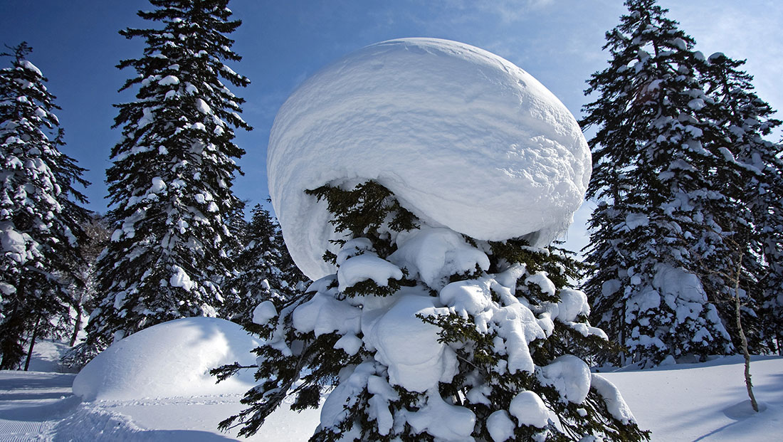 how to protect your evergreens in winter