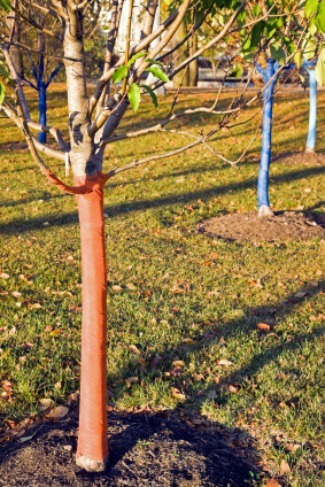 preventing damage to trees and shrubs in winter