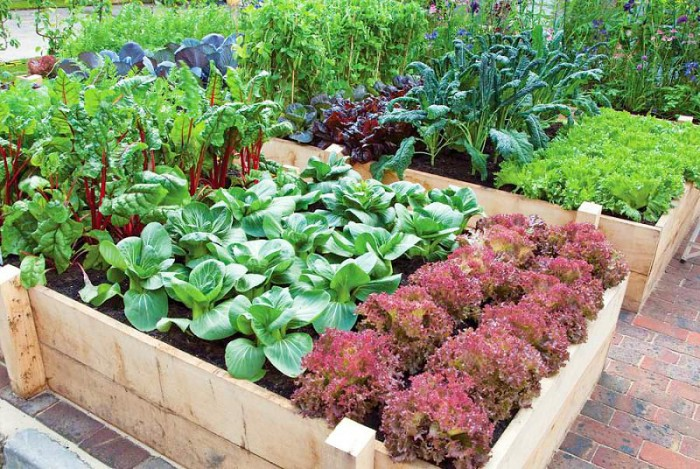 Productive vegetable garden