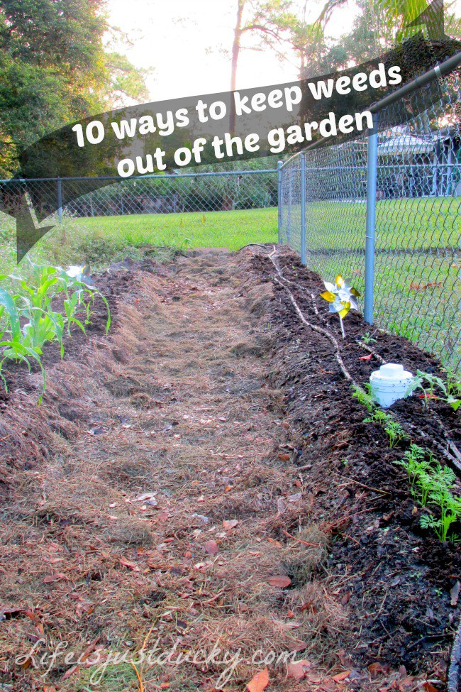 ways to keep weeds out of the garden