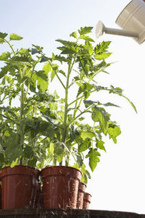 winter and urban gardening solutions
