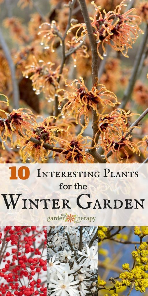 Top ten winter garden plants