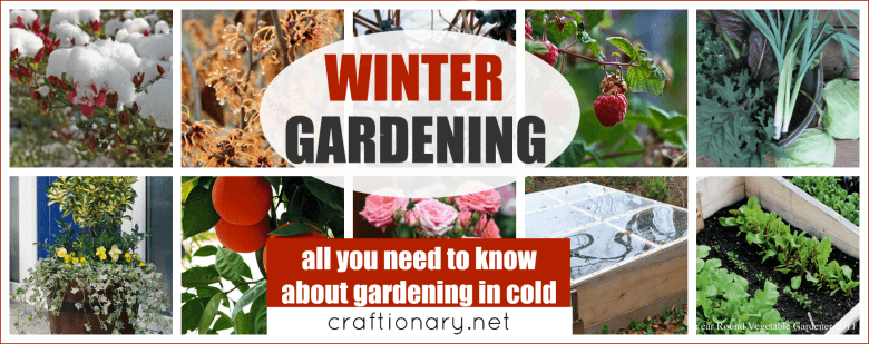 Winter gardening solutions