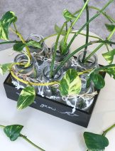 diy-plant-propagation-station-without-test-tubes